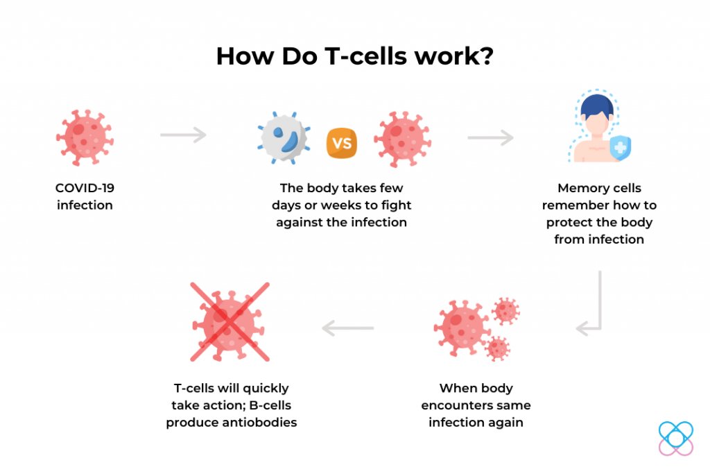 How T-Cells Work