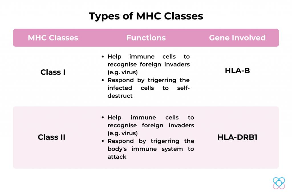 Types of MHC Classes