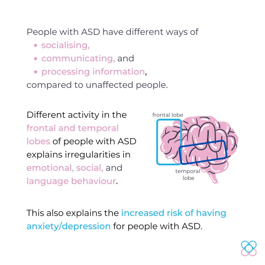 autism brain regions